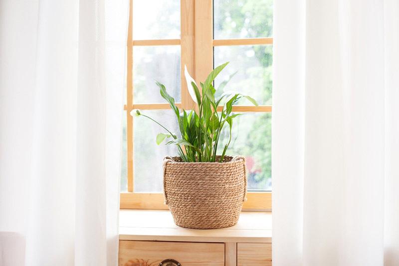 ต้นไม้ฟอกอากาศ ที่ควรปลูกไว้ในบ้าน