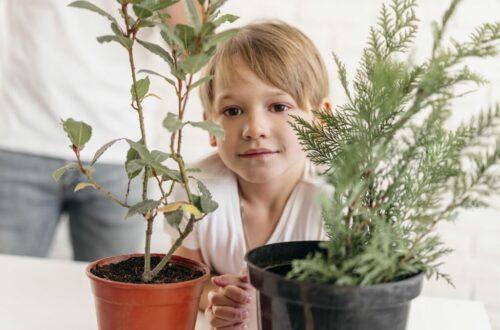 ปลูกต้นไม้ในบ้านอย่างไรให้รอด