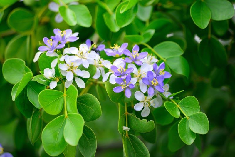 ต้นไม้ยืนต้น ออกดอกสวย ความหมายดี