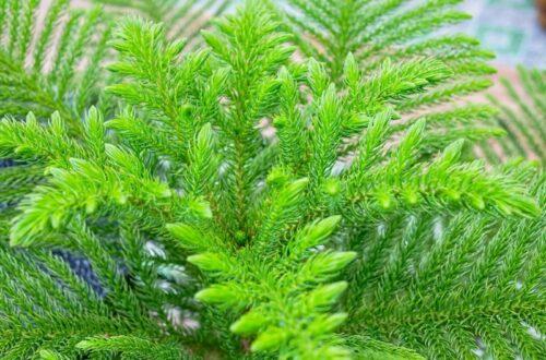 แนะนำปลูกต้นไม้พุ่มขนาดกลาง